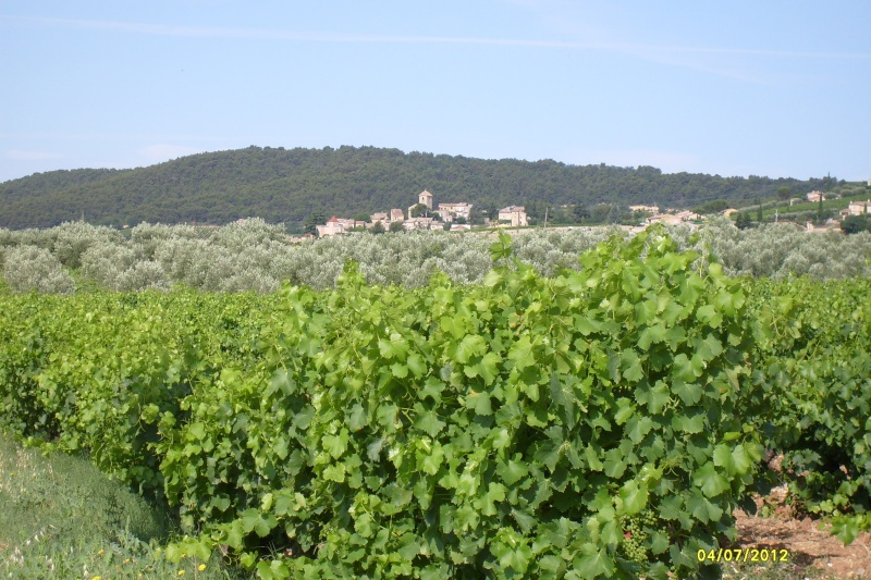 Voyage au pays des cigales, des olives, du bon vin et de la lavande S7301012