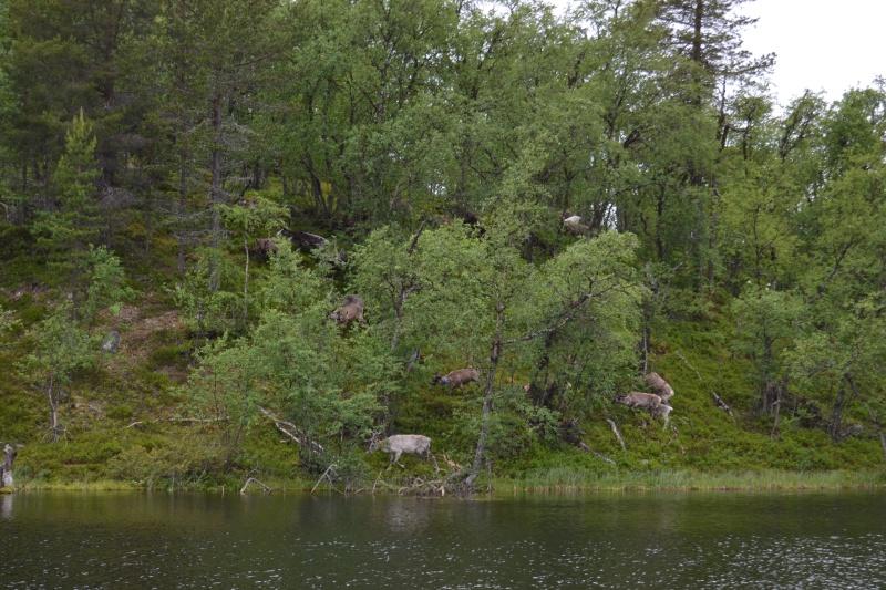 Retour  de pêche à Fjällvattnet Dsc_0416