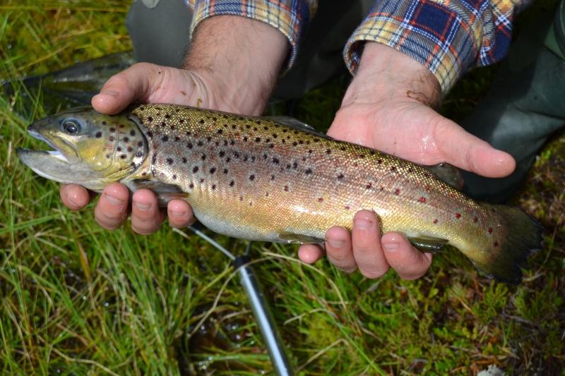 Retour  de pêche à Fjällvattnet Dsc_0417