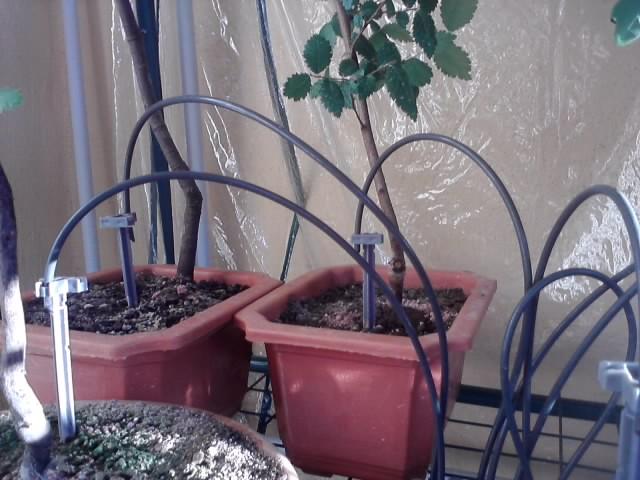 irrigazione automatica 3_acce11