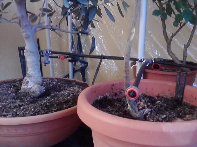 irrigazione automatica 5_impi11