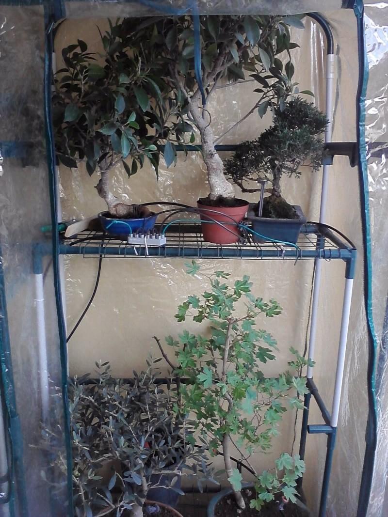 Dove coltiviamo i nostri bonsai - Pagina 13 P2403113