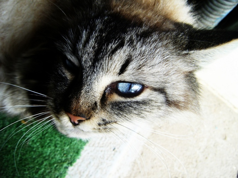 Photo d'animaux Bullerougie 0_110