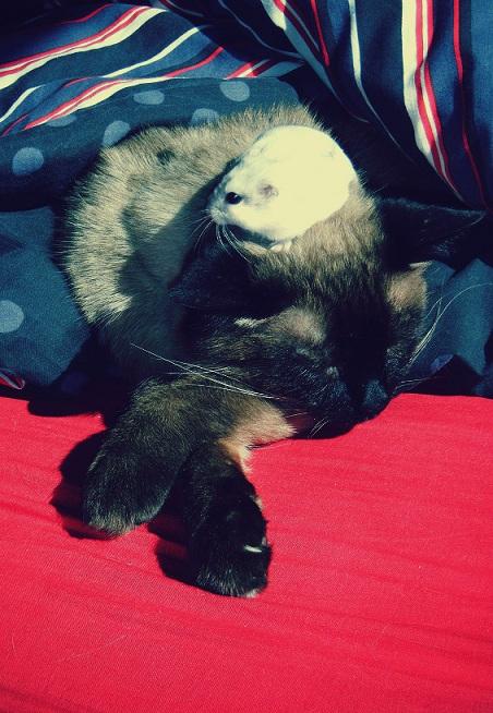 Photo d'animaux Bullerougie 0_611