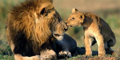 1 milhão para proibir o comércio de leões 2925_a10