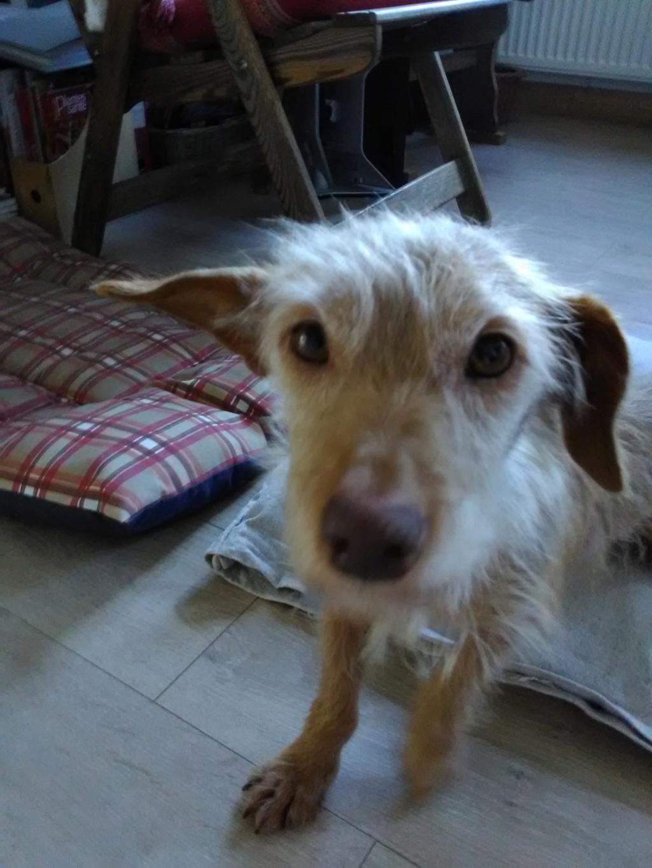 Zumia- femelle- fourrière de Târgu Frumos - réservée adoption (88) 00310