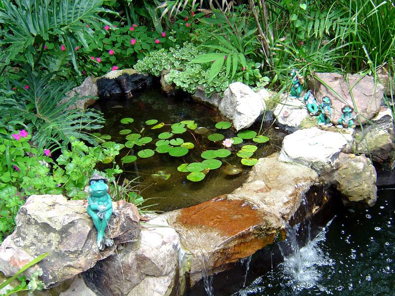 The Old Pond Dsc00512