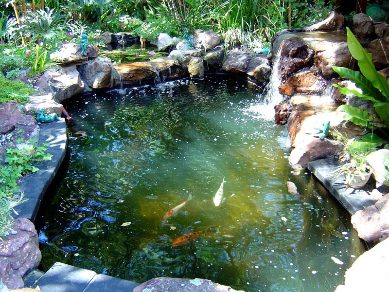The Old Pond Dsc00513