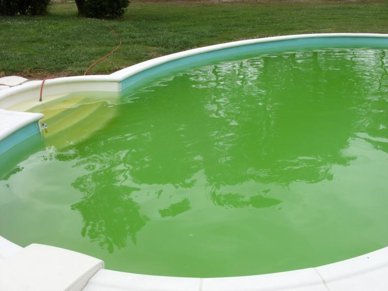 eau verte toujours et encore Piscin10