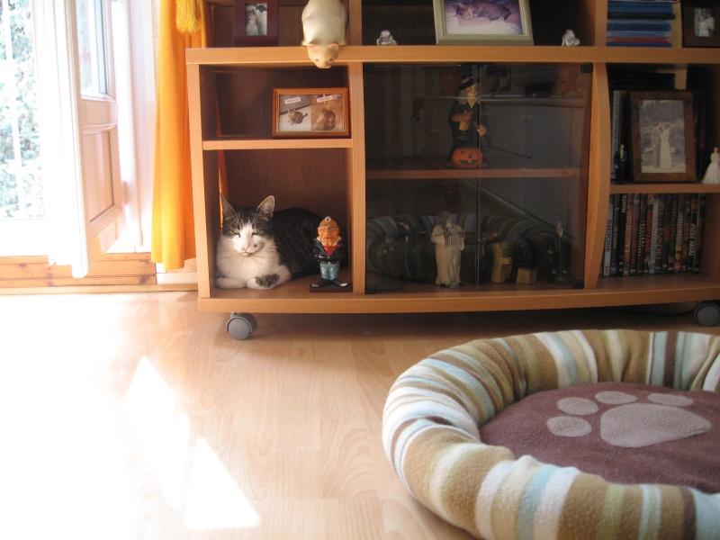 Une petite niche pour Lily  Img_3914