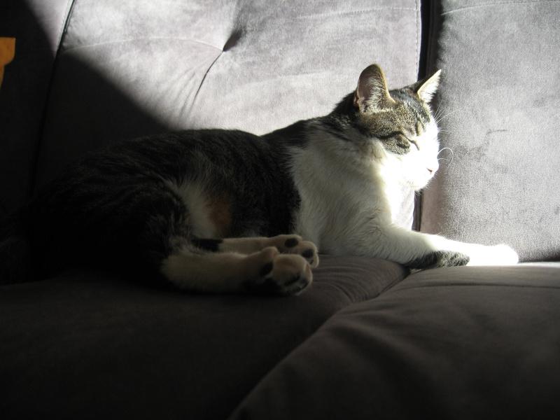"""Notre """"rayon de soleil"""" au soleil..... Img_4126"""