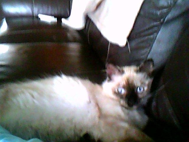 mon chaton Snapsh22