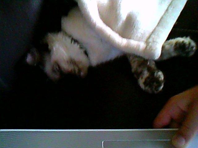 mon chaton Snapsh24