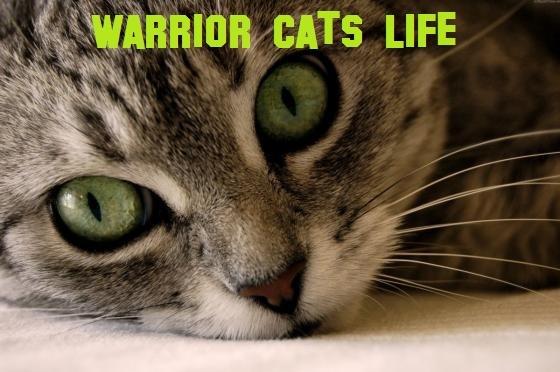 Warriorcatslife