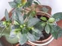 Gardenia 2012_119