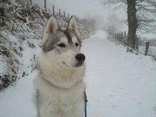 Premières neiges Cantal   13548810