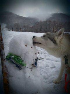 Premières neiges Cantal   13548815