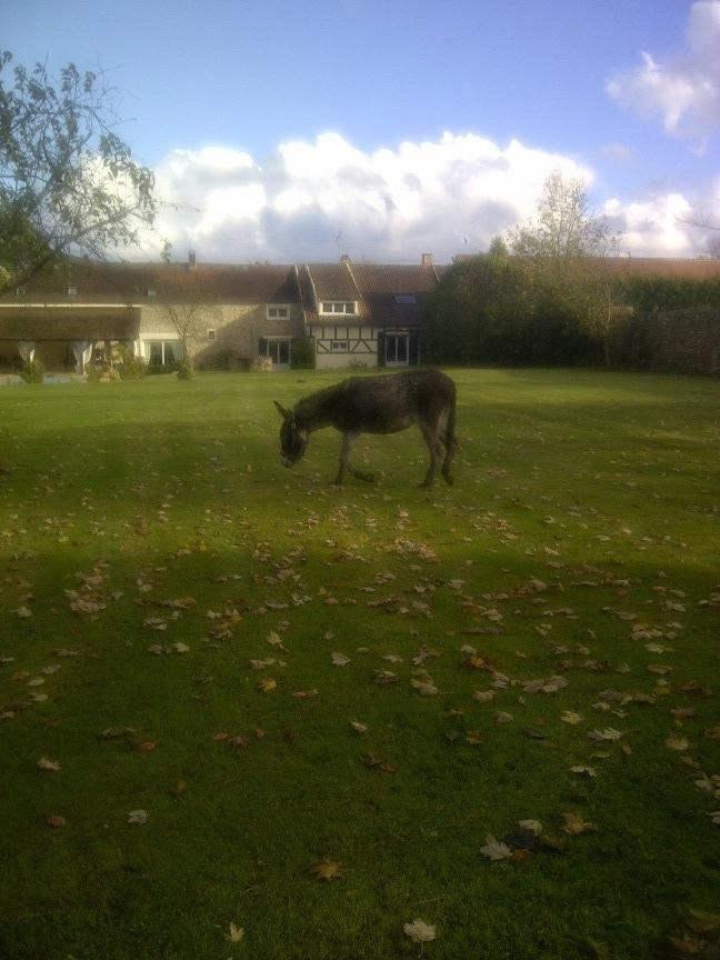 FREDO - âne né en 1995 - adopté en novembre 2012 par Virginie - Page 2 Img-2010