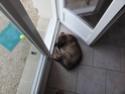 Où votre chien dort-il? Dsc03410