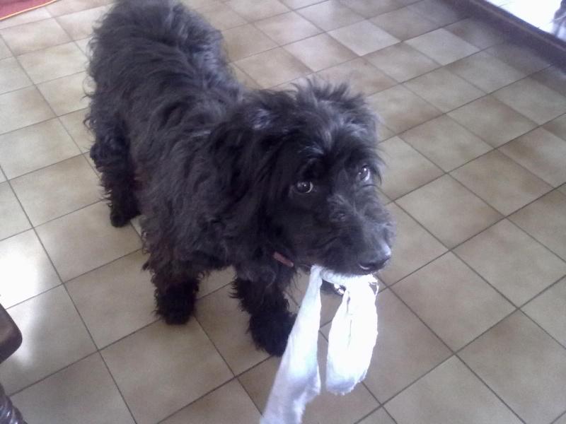 Dogsitter ! 03082010