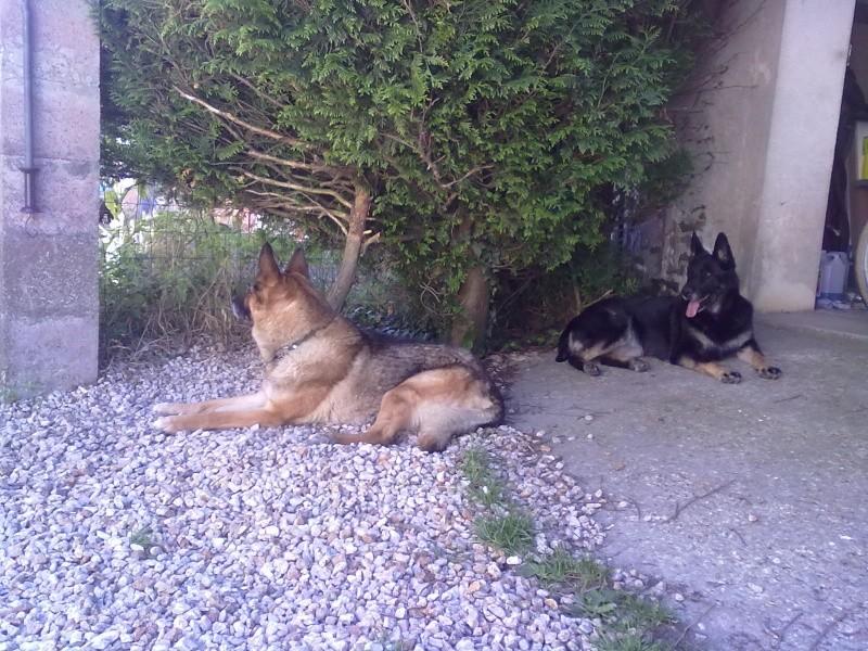 Dogsitter ! 18072011