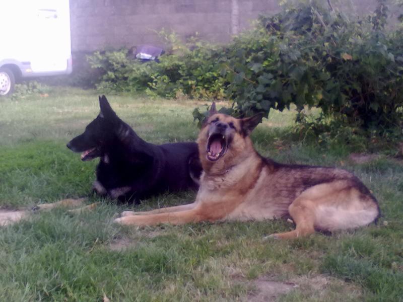 Dogsitter ! 20072010