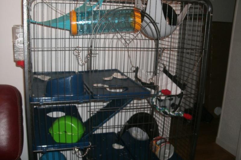 Choisir sa cage - Page 5 Gedc1212