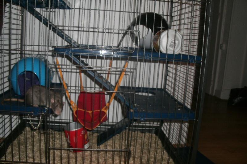 Choisir sa cage - Page 5 Gedc1213