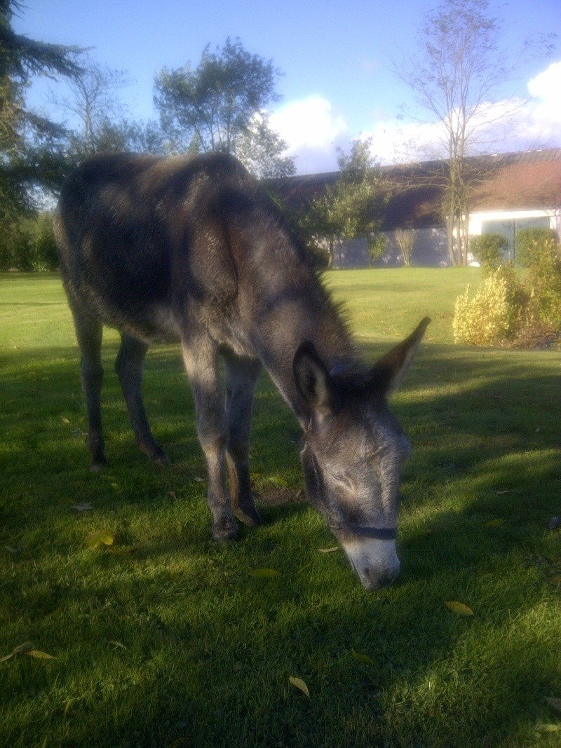 FREDO - âne né en 1995 - adopté en novembre 2012 par Virginie - Page 2 Img-2011