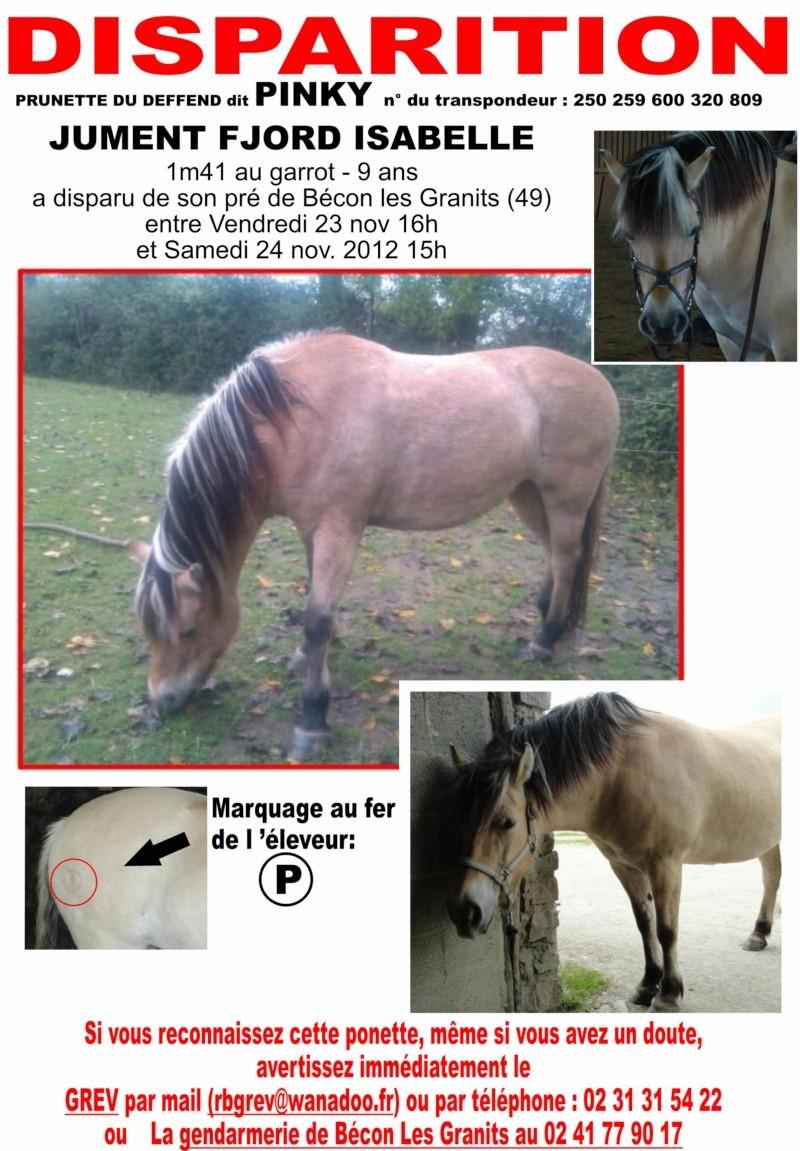 Ponette volée dans le Maine-et-Loire (49) Pinky_14