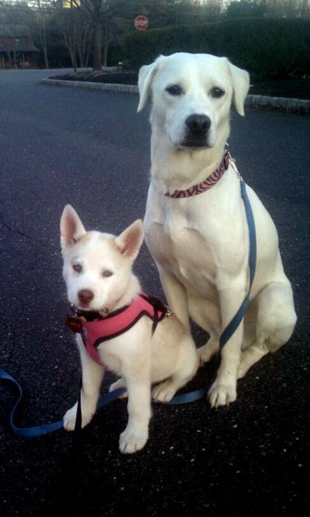 Zizzy and Yuki scrapbook! *updated 12-17* Zizzyp14