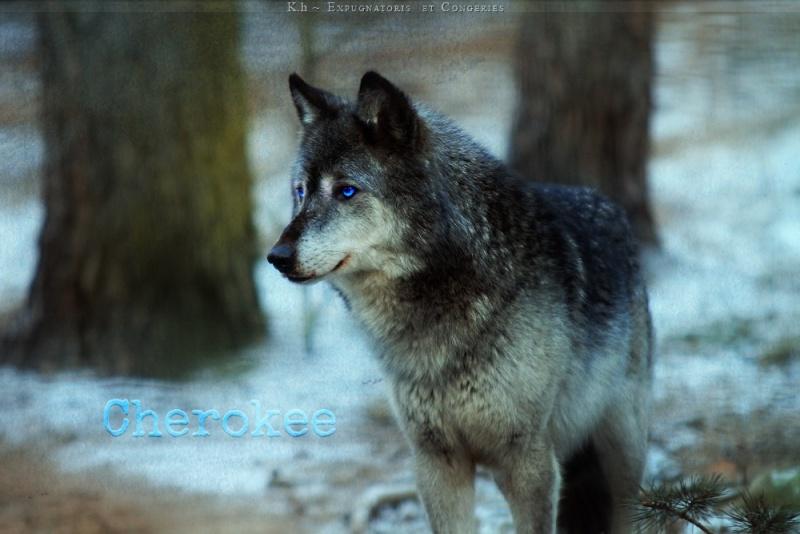 Cherokee, The Silent Betess Cherok10