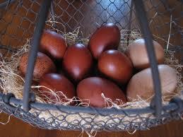 Projet petit élevage poules Marans10