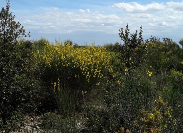 les plantes sauvages de nos campagnes - Page 14 0735b410