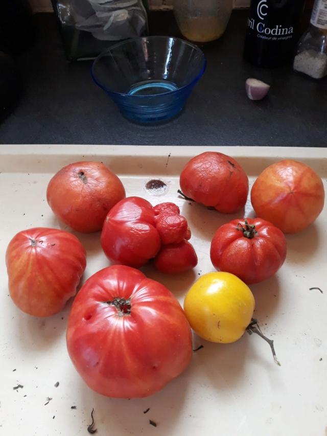 Tomates 2019 - 2020 et 2021 - Page 23 20ee0310