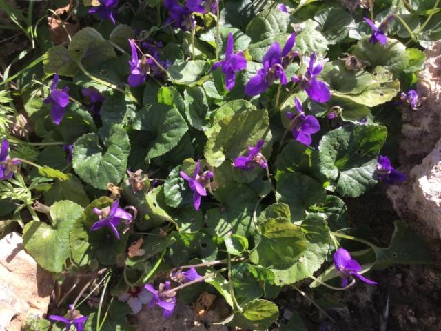 Les violettes - Page 13 58553f10