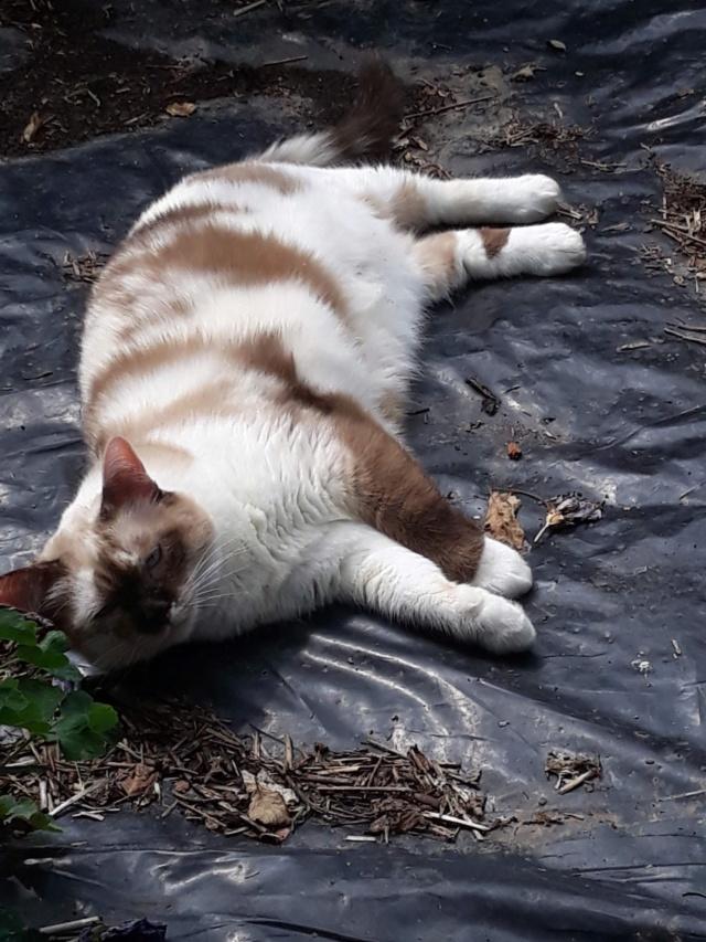 pour les amoureux des chats - Page 15 899c2210