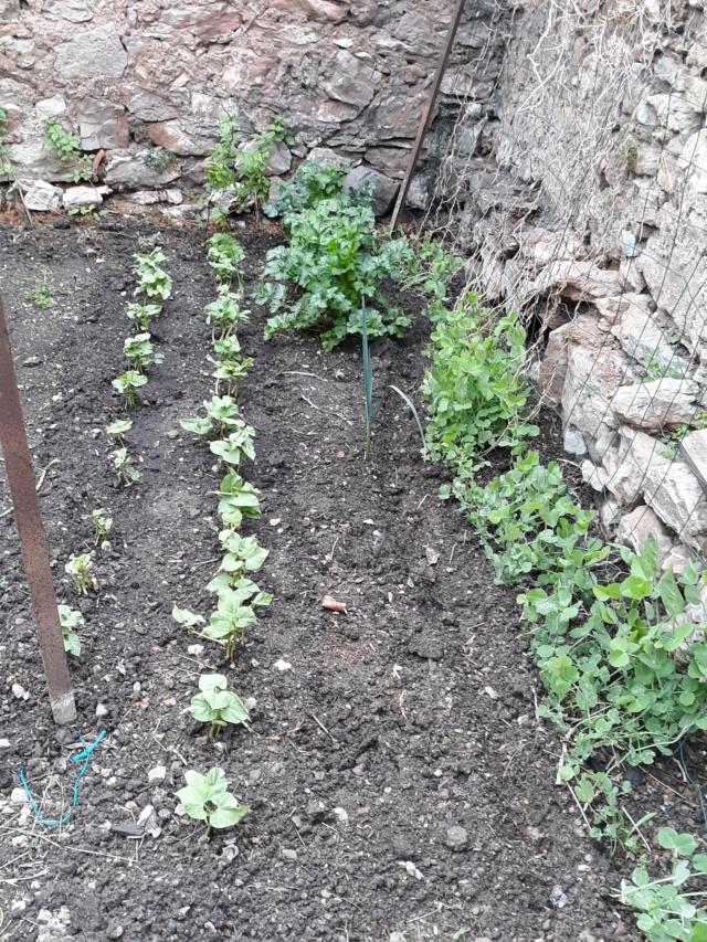 Légumes 2018  /2019 / 2020 à cazo  - Page 3 A5cab110
