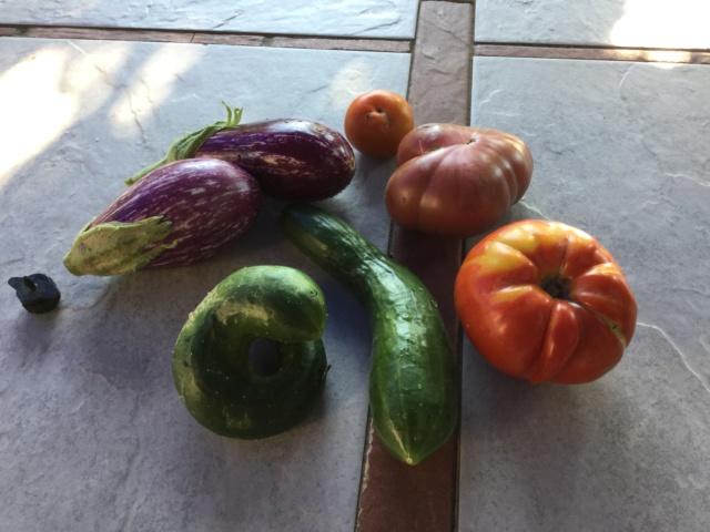 Légumes 2018  /2019 / 2020 à cazo  - Page 7 Eb395e10