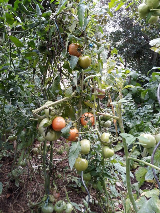 Légumes 2018  /2019 / 2020 à cazo  - Page 12 F4cc7310
