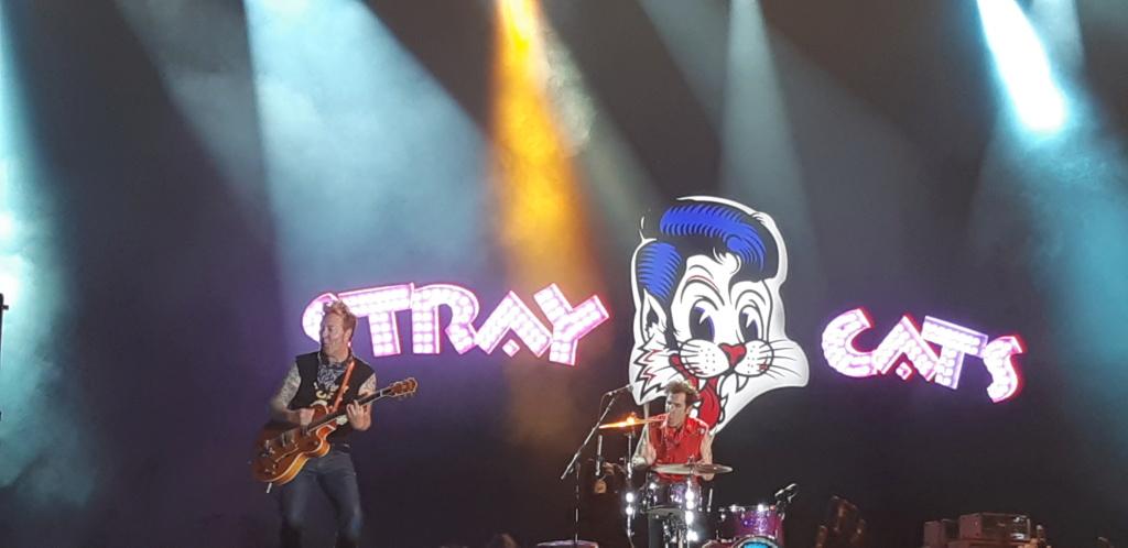 Stray Cats  20190612