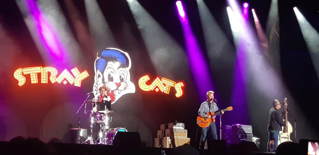 Stray Cats  20190613