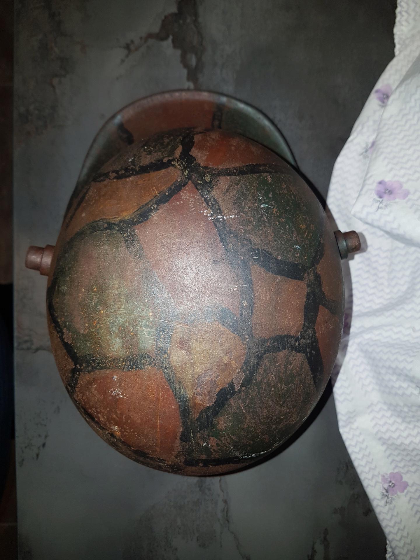 Petite coque tortue w1 20191558
