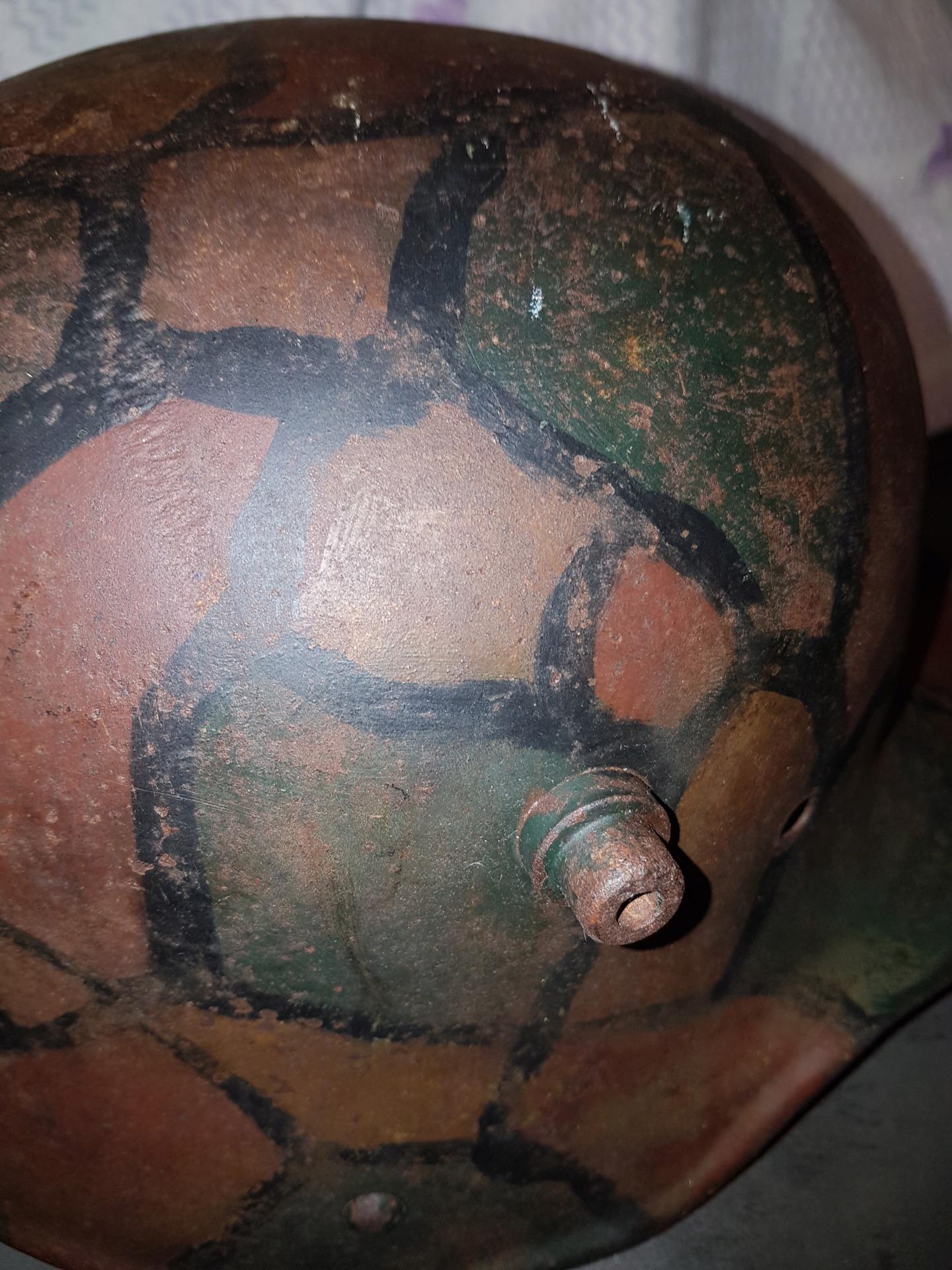 Petite coque tortue w1 20191562