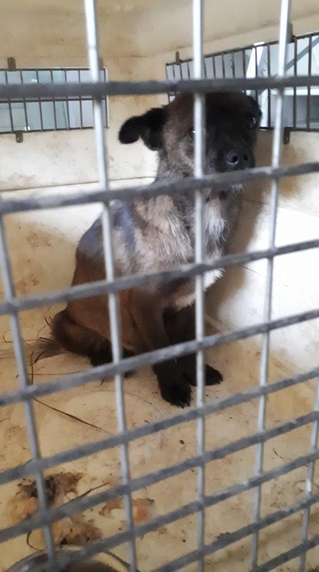 BELLA (ex FALBALA) - femelle, taille mini, née environ en juin 2017 - (PASCANI) - REMEMBER ME LAND - Adoptée par Colette (28) Falbal14