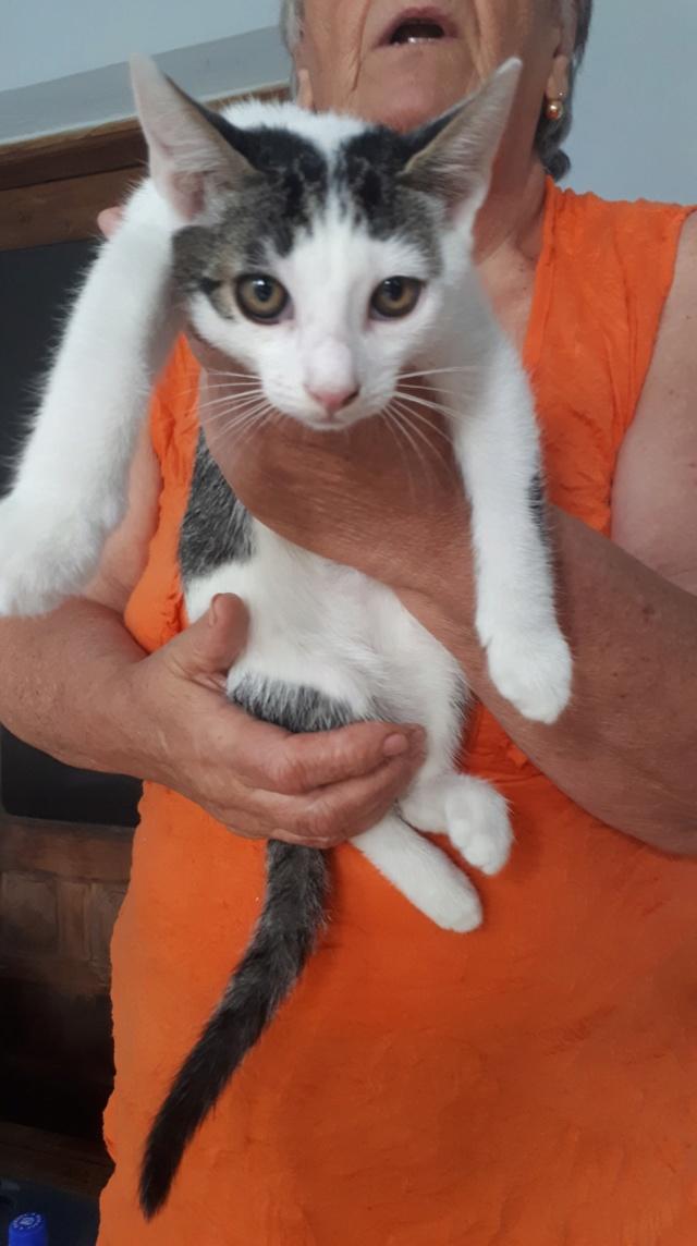 OBIWAN - chat mâle, né en mai 2018 - ADOPTE EN ROUMANIE Obiwan10