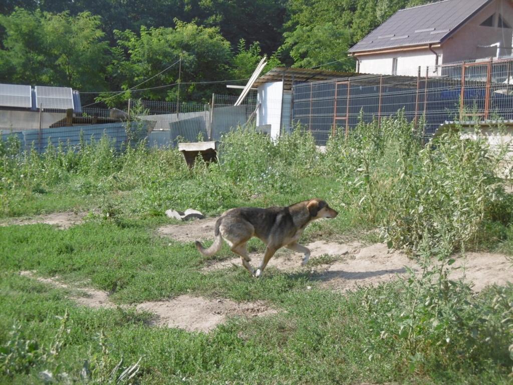 SIRTAKI - mâle croisé de grande taille, né en 2015 (PASCANI) - REMEMBER ME LAND - Page 2 Sirtak10