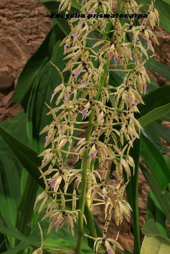 Expo Orchidées de l'abbaye de Fontfroide (11) - Page 2 Fontfr10