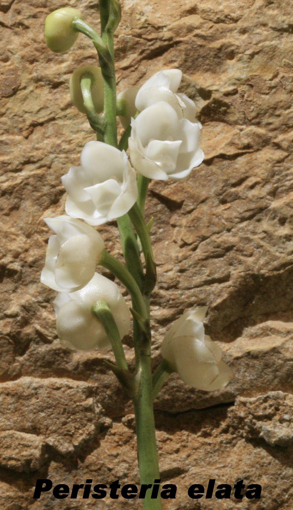 Expo Orchidées de l'abbaye de Fontfroide (11) - Page 2 Fontfr12
