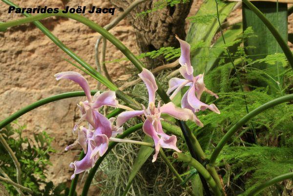 Expo Orchidées de l'abbaye de Fontfroide (11) - Page 2 Fontfr13